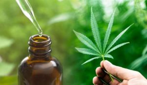 A complete guide for buying CBD oil for pets